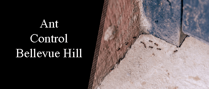 Ant Control Bellevue Hill